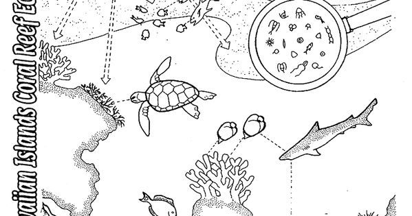biome coloring sheets Ecosystem coloring pages