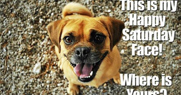 Dog Dogs Dogsofinstagram Puppy Love Instadog Pet Cute Art Pets Doglover Like Dogstagram Animals Instagra Puggle Dogs Excited Dog Dog Infographic