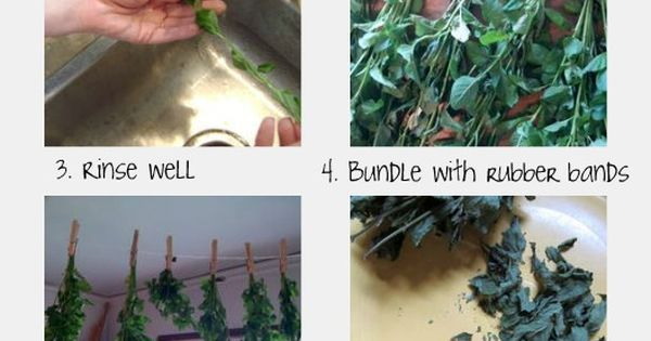 How To Grow and Harvest Your Own Herbal Mint Tea
