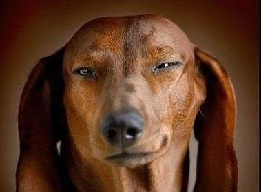 Look Into The Faces Of These Dogs And Try Not To Laugh Funny Dog