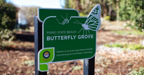 Monarch Butterfly Grove | Pismo Beach, CA. 30k+ butterflies here . Simply