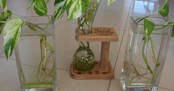 Click para ver la foto a tama o completo decoraci n - Ver plantas de interior ...