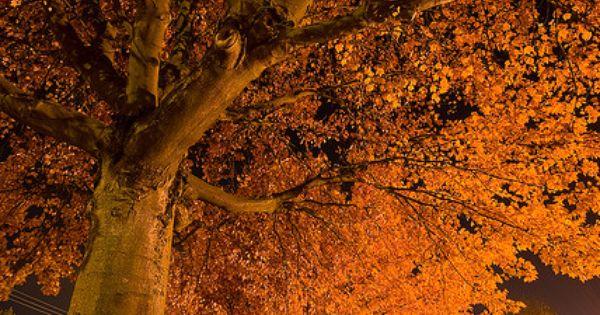 Falling into the night...  숲, 가을 및 나무