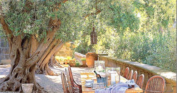John Saladino's Villa DiLemma - Olive Tree Allee