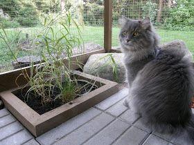 Kissan Ulkoiluaitaus