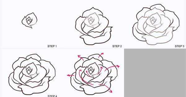 Drawing a rose realistic bing images drawing board for How to step by step draw a rose