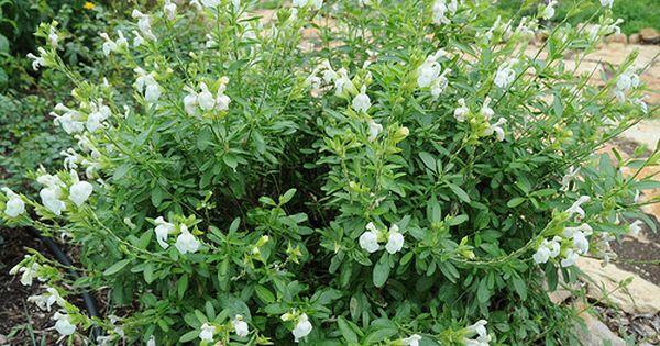 Evercolor Eversheen Plants Low Maintenance Landscaping Live Plants