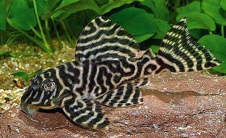 Pin On Aquatic Animals