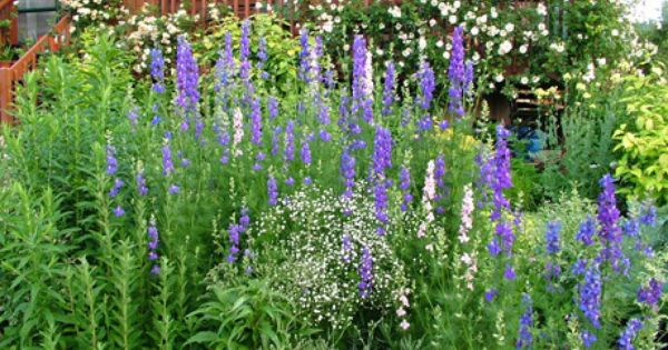 What S In A Name The Good The Bad And The Ordinary Side Garden Garden Images Larkspur