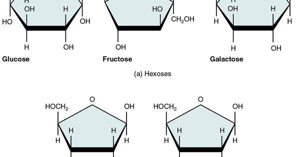 217 five important monosaccharides