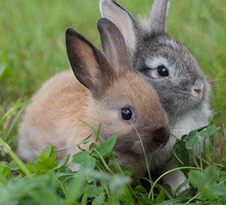 Moringa Bunny Balls Rabbit Manure Organic Fertilizer Cute