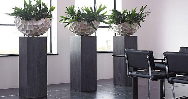 Decoratie planten google zoeken bloempotten for Interieur beplanting
