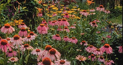 How To Make Butterfly Gardens University Of Kentucky College Of