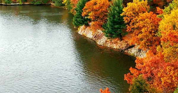 Fall leaves on the water's edge. Spectacular!!