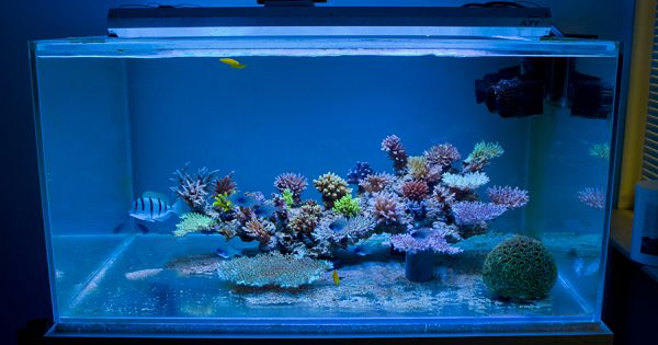 Apogonreeffeature amazing for such a small minimalist for Small saltwater fish tank