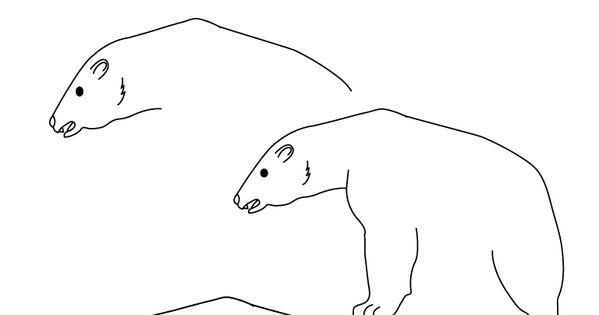 Dessin ours polaire dessiner animaux du parc - Dessiner un ours en maternelle ...