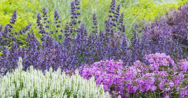 cottage garden. salvia, phlox, grasses & lamb's ear (has 12 other ideas