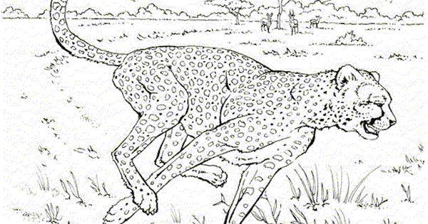 gepard ausmalbilder  ausmalbilder für kinder