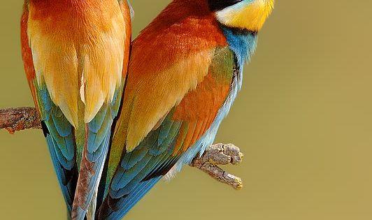 ♥ - Nature's Color Palette