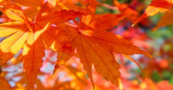 塩の道探索中に行きあった大島小松川公園の紅葉とスカイツリーと古代遺跡 公園 古代遺跡 日本 の 風景
