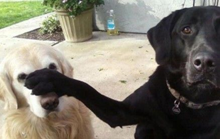 Funny Dog And Cat Photos With Captions 5 Funny Dog Pictures