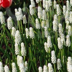 blommor utomhus april