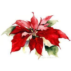 Watercolor Poinsettia Google Search Aquarelle Noel Cartes