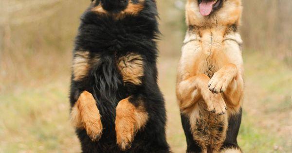 When Were Dog Collars Invented