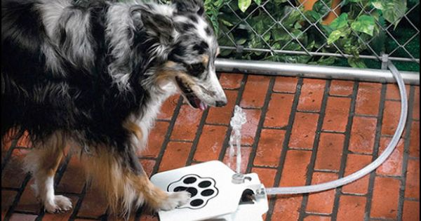 Doggie Water Fountain, great idea. Whoever invented this definitely found a need