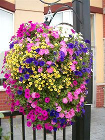 Hanging Flower Basket With Side Openings To Provide More Oxygen To The Root System I Bet It Would Be An Easy Diy Hanging Flower Baskets Hanging Plants Plants