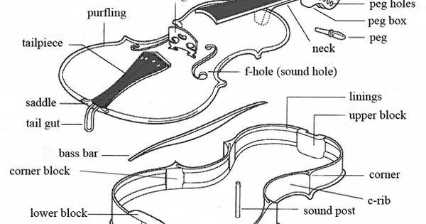 violin parts and diagram black  u0026 white drawing