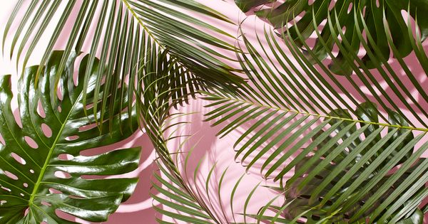 West-elm-tropical-leaves-desktop-wallpaper.jpg (4800×2700