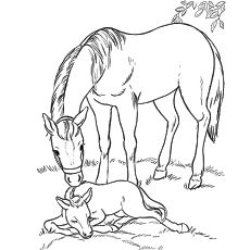 Top 55 Free Printable Horse Coloring Pages Online Animal