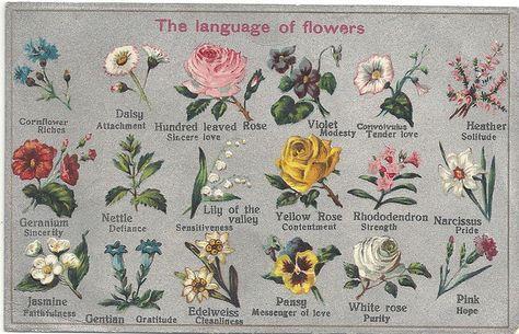Parte Dei Fiori.Meglio Regalare Un Mazzo Di Rose O Di Orchidee Per Evitare