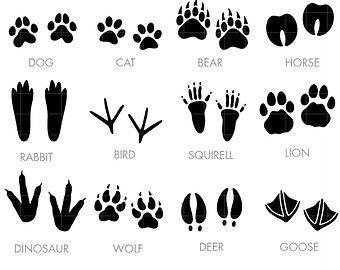 Image Result For Animal Footprints Templates Animal Tracks Clip Art Digital Clip Art