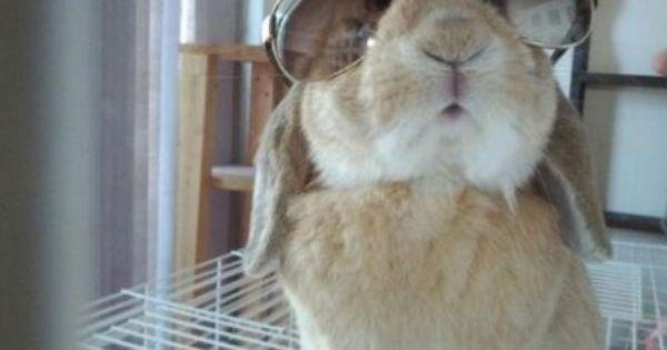 Golden Trash Pet Rabbit Rabbit Pictures Funny Animals