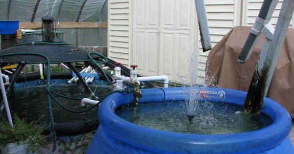 Tilapia farming aquaponics aquaculture hydroponics for Raising tilapia in a pool