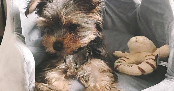 Nandog Pet Gear Crown Dog Bed Micro Plush Light Gray Dog Beds