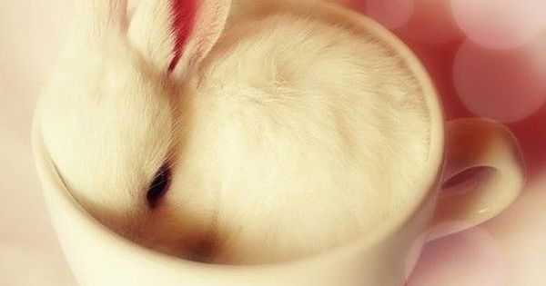 bunny Baby Animals cute baby Animals| http://cute-baby-animals-593.blogspot.com