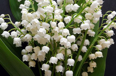 Lily of the valley My favorite spring flower, May's flower and smells