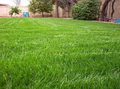 How To Have A Green Lawn Year Round In The Arizona Desert Everything You Need To Know Bermuda Grass Desert Landscaping Backyard Growing Grass