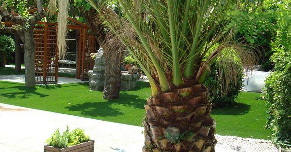 Jardin con cesped artificial piedra decorativa alrededor de palmera 1 jardines pinterest - Piedra decorativa jardin ...