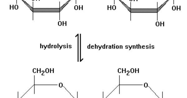 dehydration and hydrolysis relationship marketing