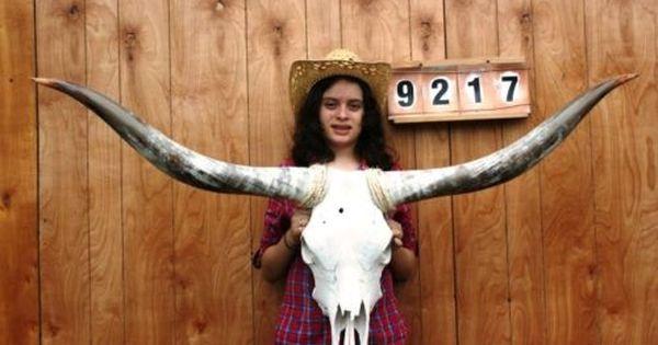 """4/' to 4/' 6/""""/"""" MOUNTED STEER LONGHORN SKULL HORN COW BULL LONG HORNS NEW ONE SET"""