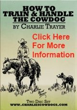 I Just Got My Two Part Dvd On How To Train Handle The Cowdog By