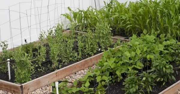 How to grow an organic garden with limited space best for Limited space gardening ideas