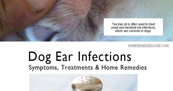 Dog Ear Infection Cure Home Remedy