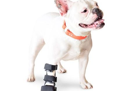Walkin Front Splint Dog Leg Dog Braces Dog Wheelchair