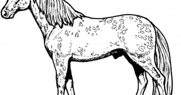 Appaloosa Horse Coloring Horse Coloring Pages Horse Coloring Horse Coloring Books