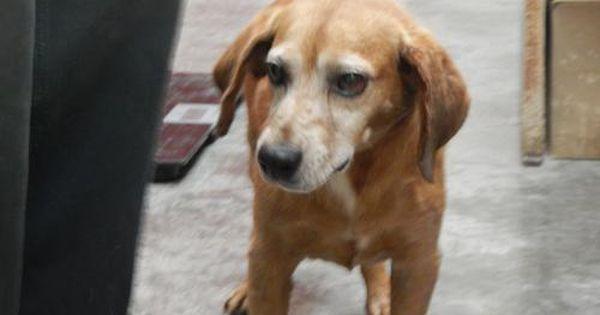 Adopt Mason On Animal Shelter Animals Pet Life
